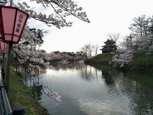 上越市 高田城百万人観桜会 外堀からの風景写真