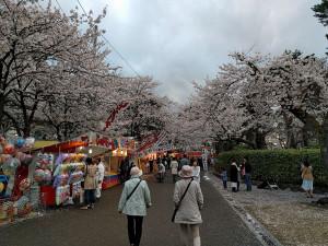 上越市 高田城百万人観桜会 小林古径邸付近の通りの写真