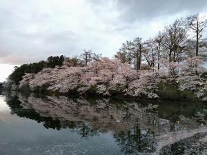 上越市 高田城百万人観桜会 内堀の風景写真