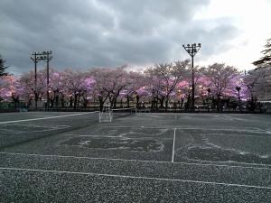 上越市 高田城百万人観桜会 日没直後のさくらロード内テニスコートの風景写真