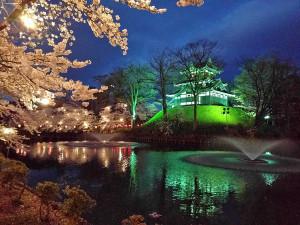 日本三大夜桜 上越市 高田城百万人観桜会 高田城と噴水の夜桜風景写真