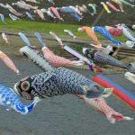 加茂川の鯉のぼり500匹!