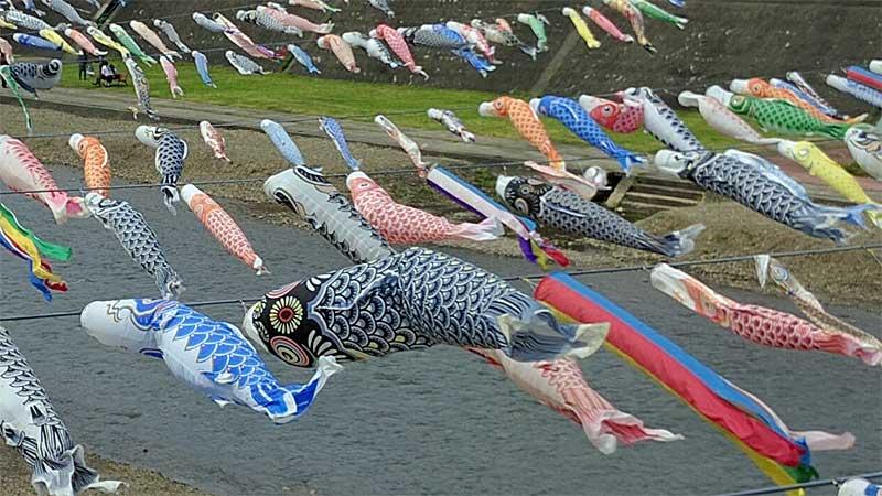 加茂川 鯉のぼり