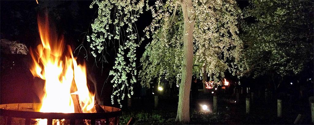 じゅんさい池公園 かがり火とシダレザクラ