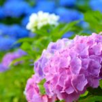 【2017年】今年の新潟の梅雨入りはいつ?