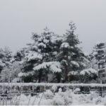 突然の降雪に交通網はビックリ!ゲレンデOPEN続出♪