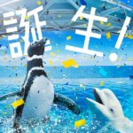 もうすぐオープン!上越市の水族館「うみがたり」