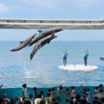 上越市立水族博物館 うみがたり イルカショーを見てきたよ